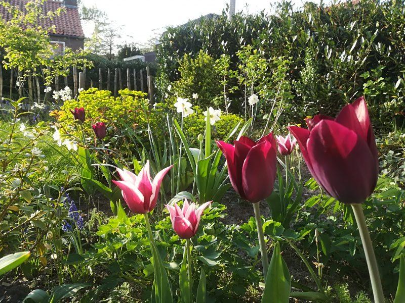 Voorjaar in eigen tuin